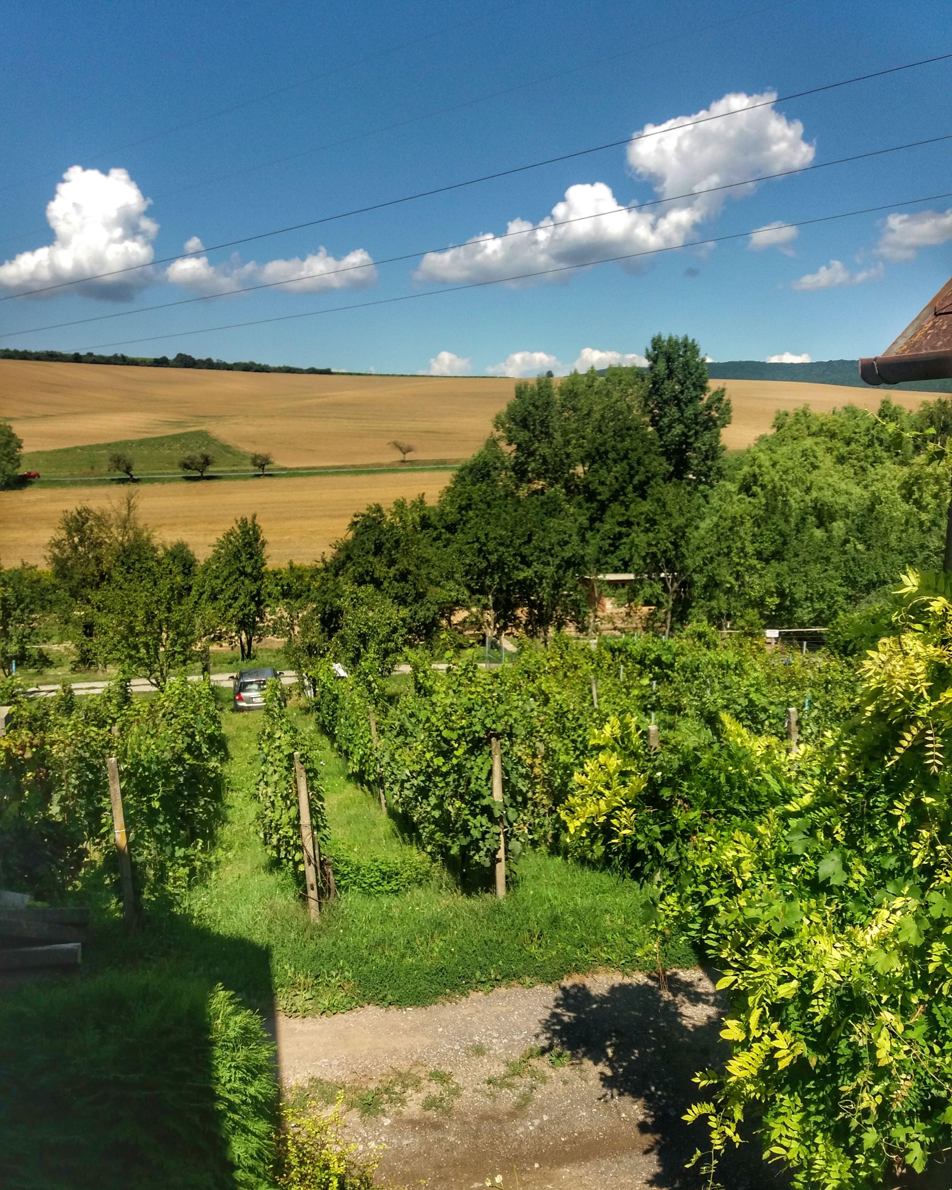 Výhled z terasy na vinici - léto 2019
