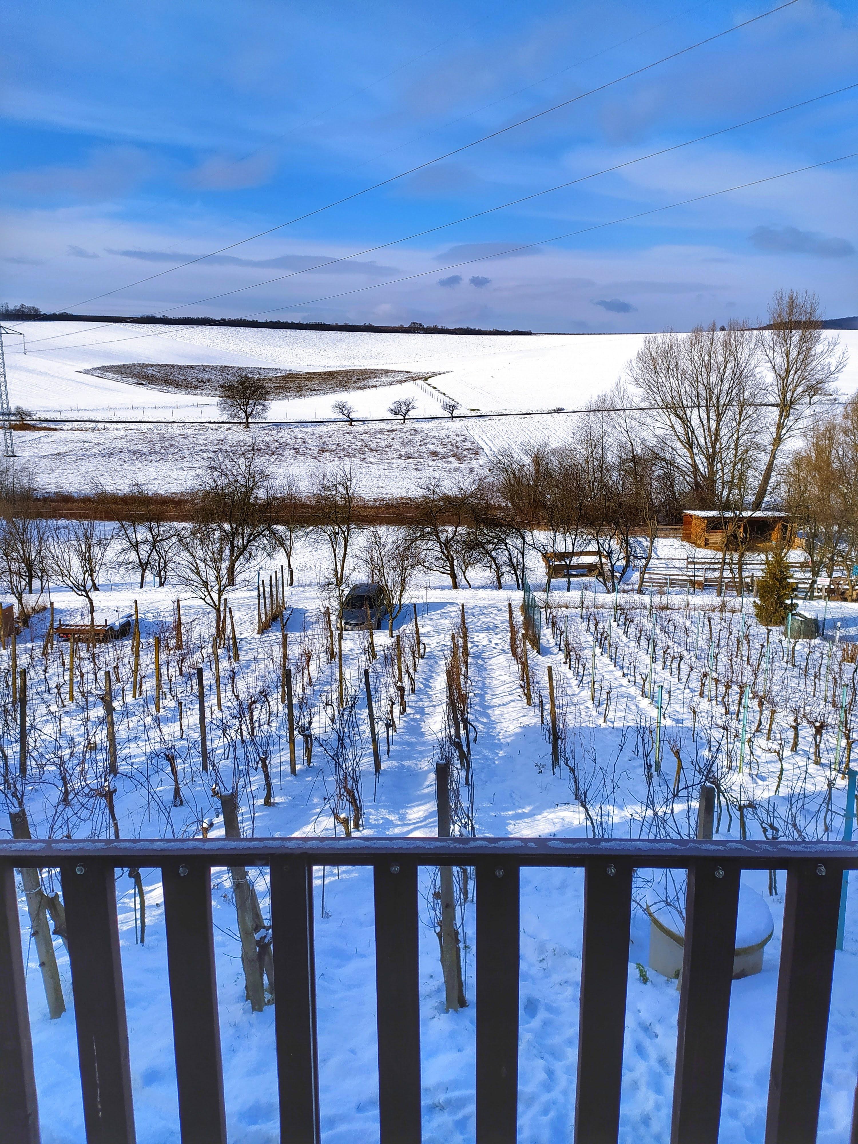 Výhled z balkonu na zasněženou vinici - leden 2021